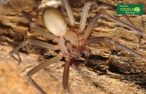 Bị nhện cắn có nguy hiểm không