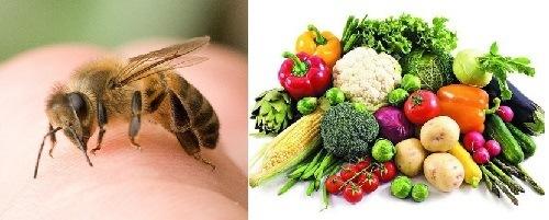 Bị ong chích kiêng ăn gì và nên ăn gì