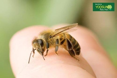 Bị ong chích tốt hay xấu