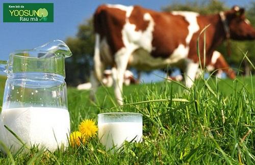 Bé dị ứng đạm sữa bò là gì